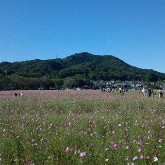 ふもとの花畑もキレイな関東埼玉の日和田山