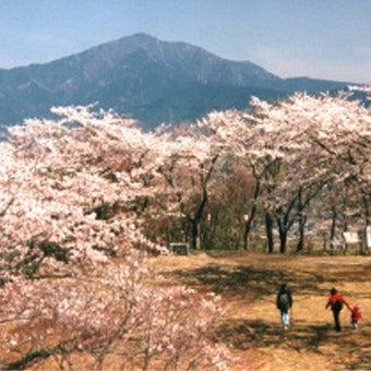 弘法山は桜もきれいで関東登山のおすすめスポット