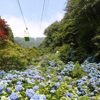 ropuwheiajisai_済