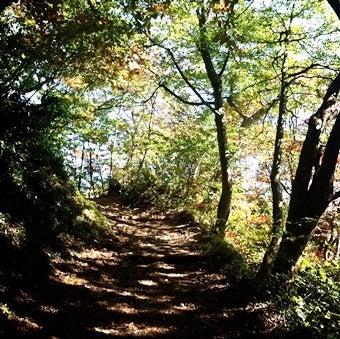 森林浴をしながらの登山道_済