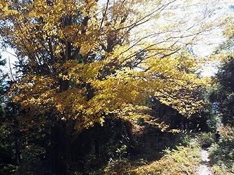 小仏峠の城山から高尾山へ行く途中には紅葉が