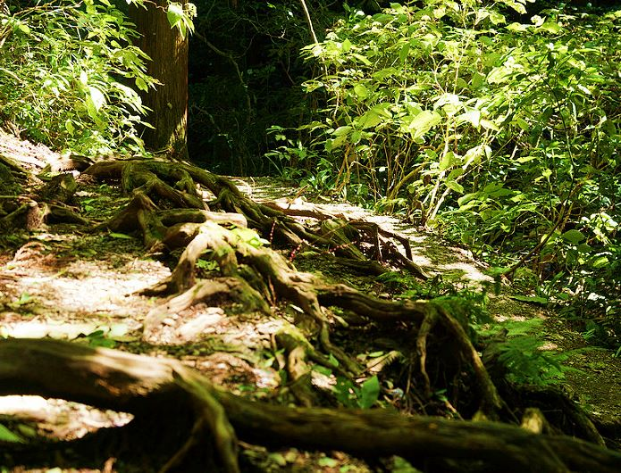 小仏峠から高尾山へ緑の中を進む