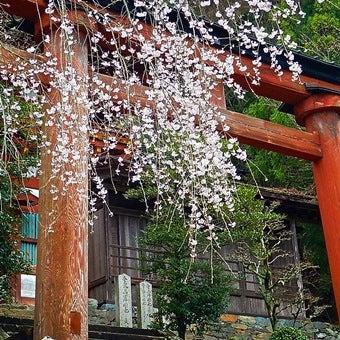 枝垂桜も美しい吉野山