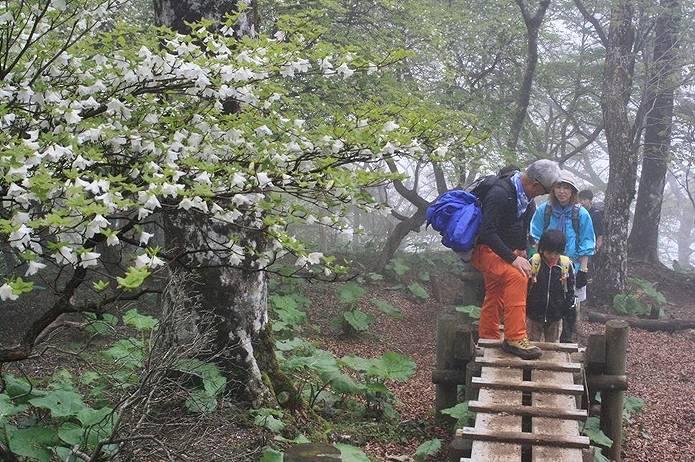 檜洞丸登山道
