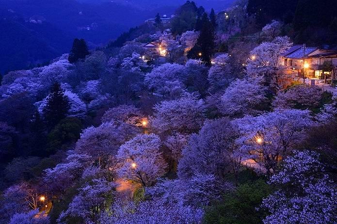夜はライトアップされる吉野山