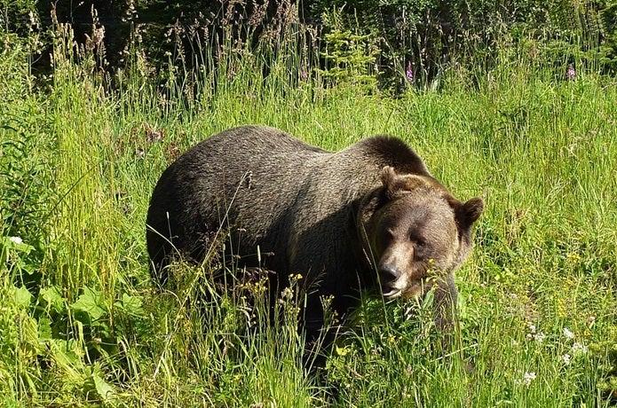 熊鈴に反応するクマ
