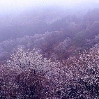 幻想的な吉野山