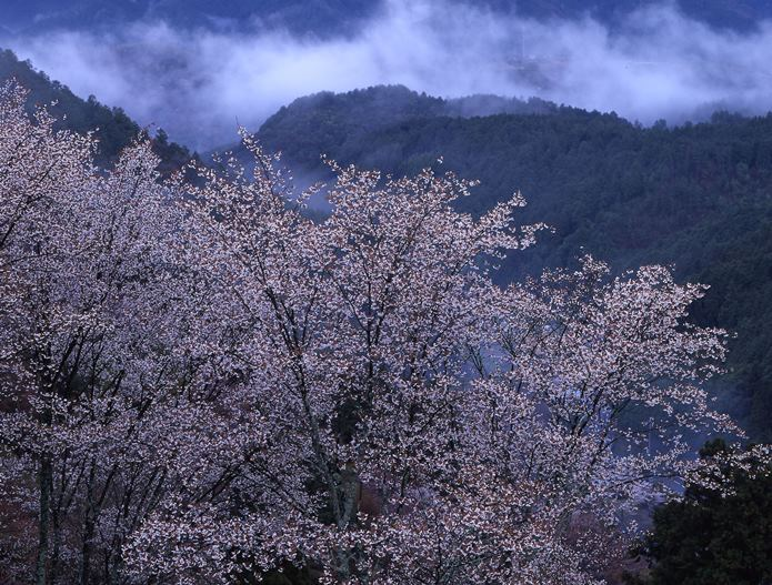 吉野山のエリアアクセス情報