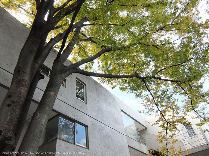 コンデジで撮影した木と建物
