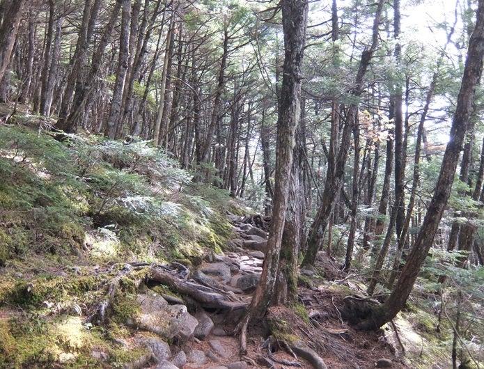 金峰山の原生林