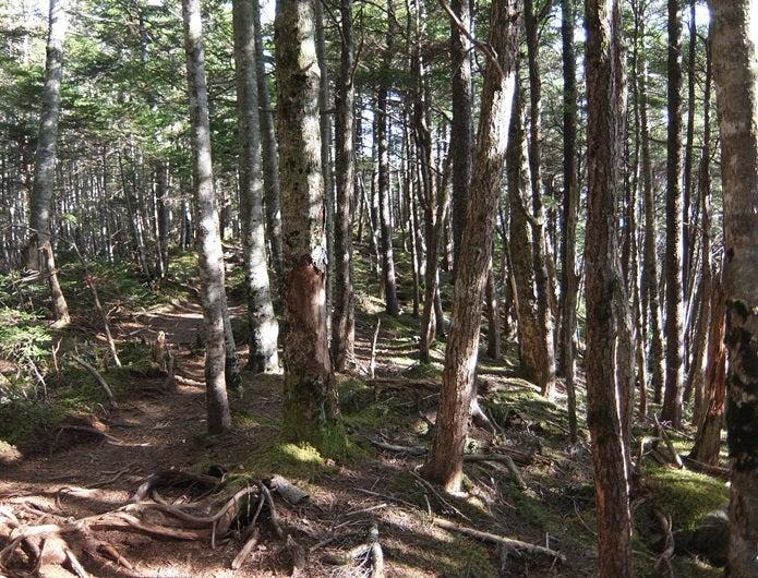 金峰山の林道