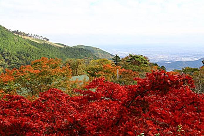 秋の大山阿夫利神社