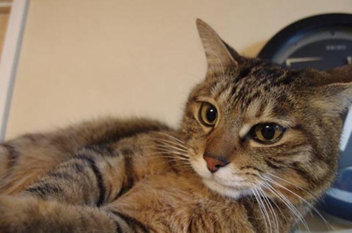 オリンパスのコンデジで撮影した猫