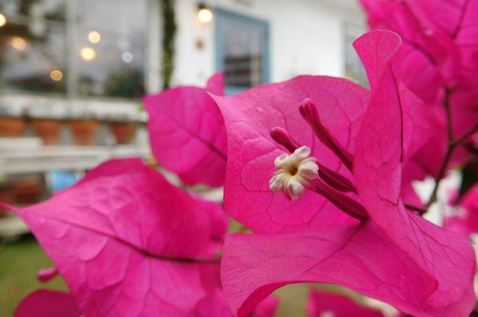 ニコンのコンデジで撮影した花の写真