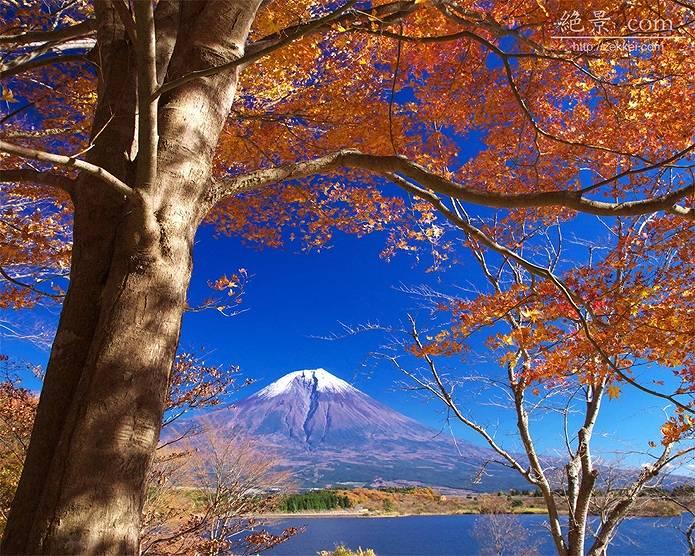 富士山 画像 黄葉