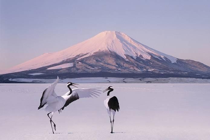 富士山 画像 鶴
