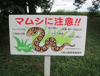毒蛇のマムシ