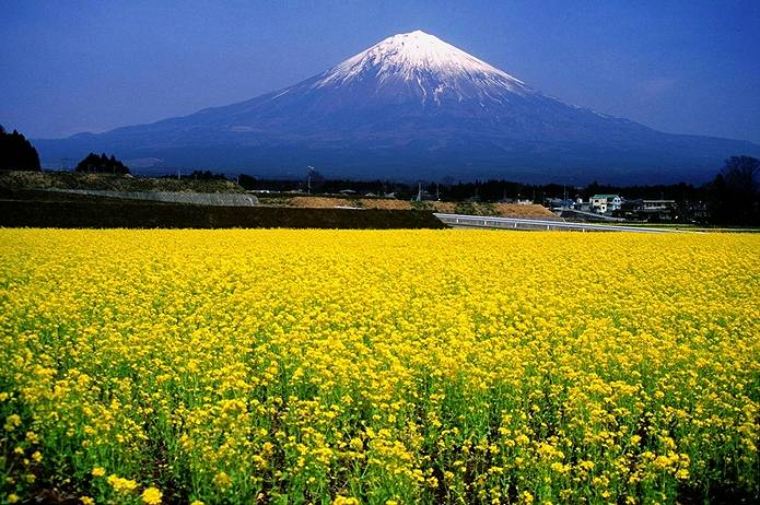 富士山 天気 春