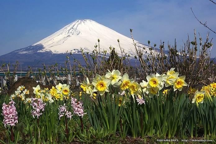 富士山 画像 スイセン