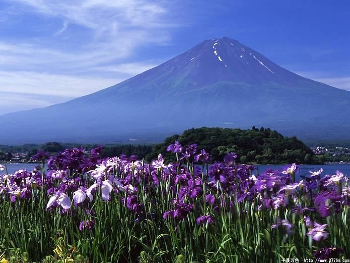 富士山 画像 菖蒲