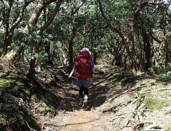 天城山を歩く女性