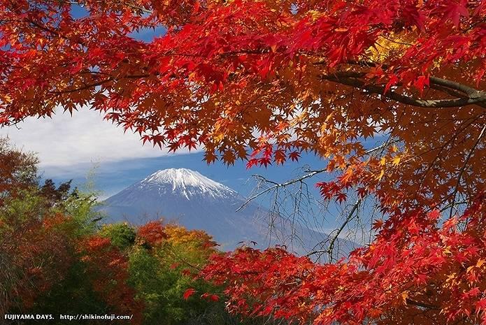 富士山 画像 もみじに囲まれて