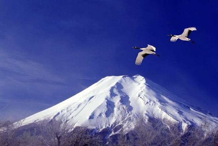 富士山 画像 鶴飛翔
