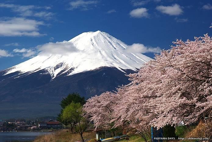 富士山 画像 桜
