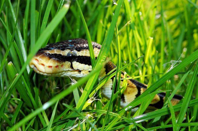 snake-365037_1280