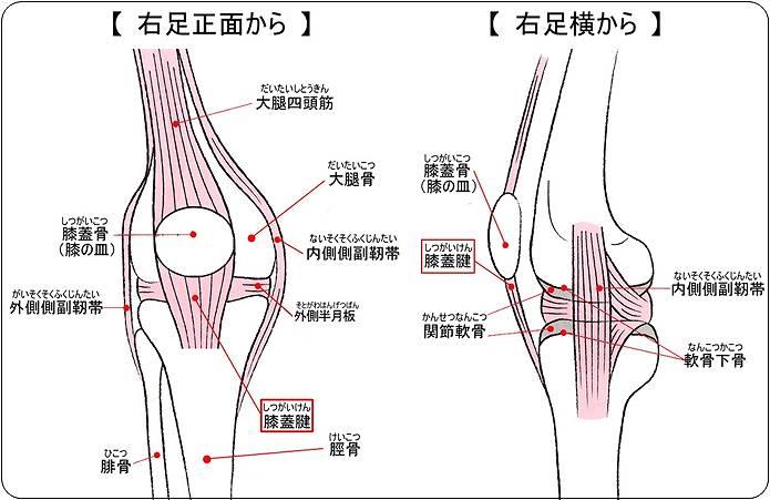 膝の痛み 膝の下が痛い場合