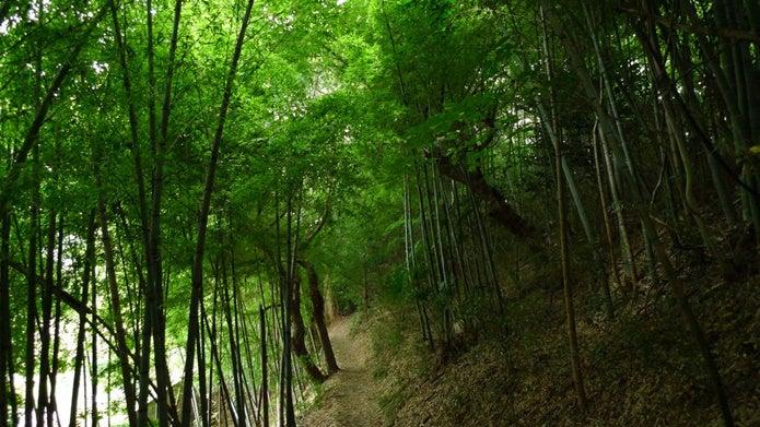 鎌倉ハイキング中の竹の道