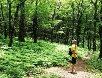森林浴がてらハイキングを楽しむ男性