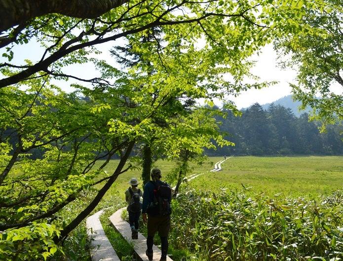 森林浴でハイキングしている人