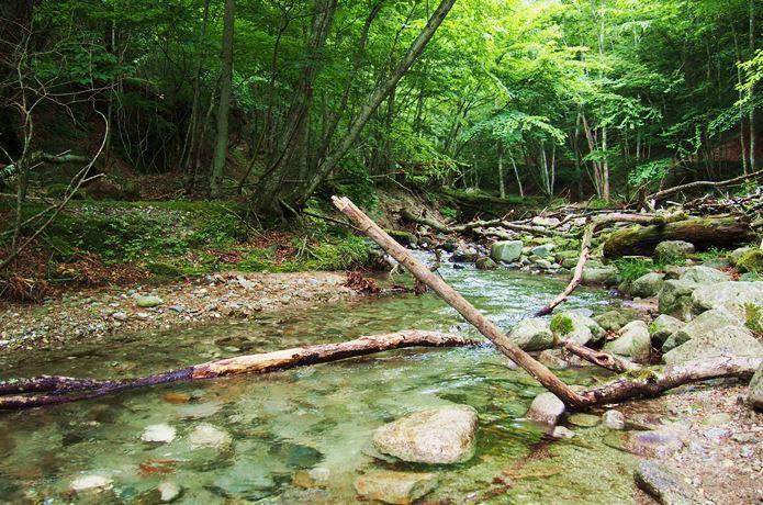 西沢渓谷の河川