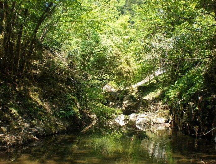 森林浴ができる阿瀬渓谷