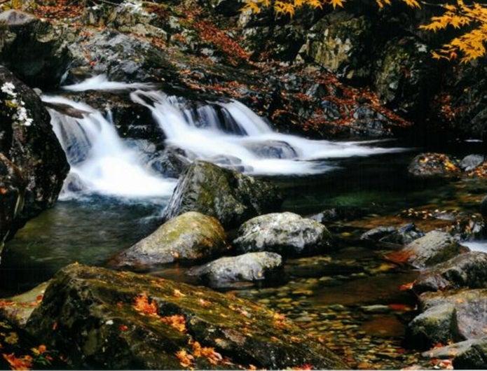 森林浴ができる福知渓谷