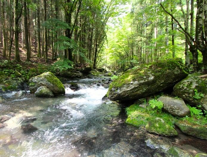 森林浴ができる川と林