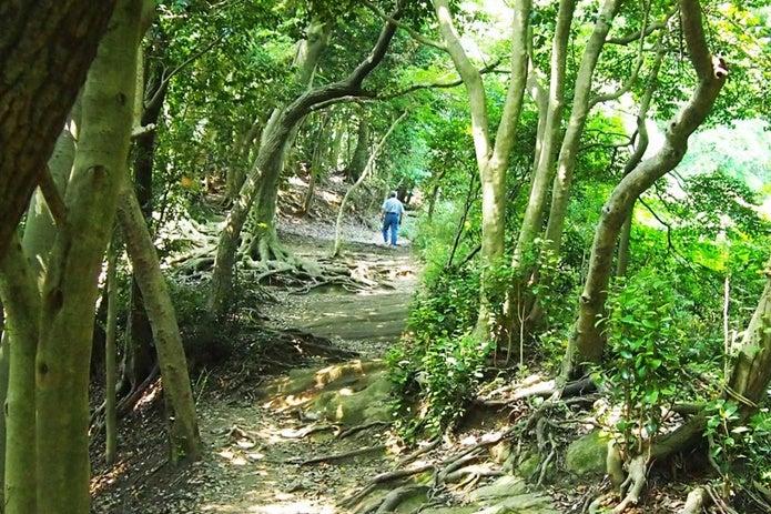 鎌倉ハイキングの道を歩く男性