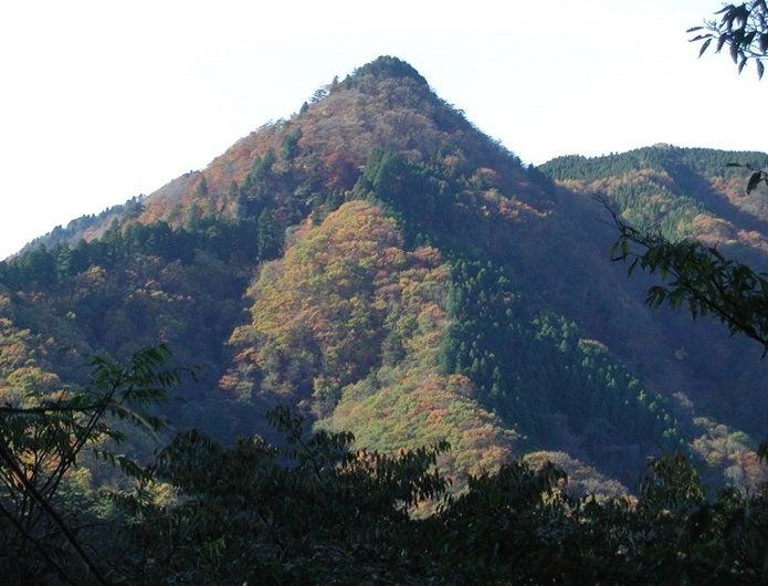 森林浴ができる御岳山