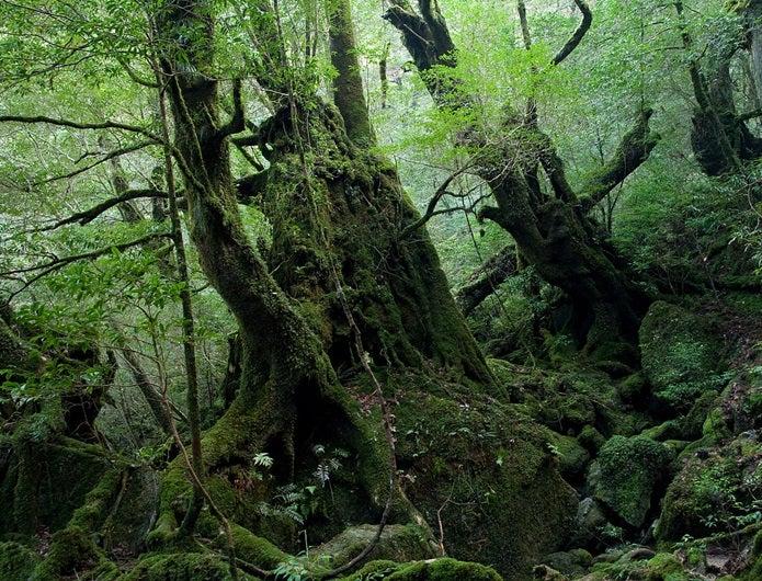 森林浴ができる白谷雲水峡