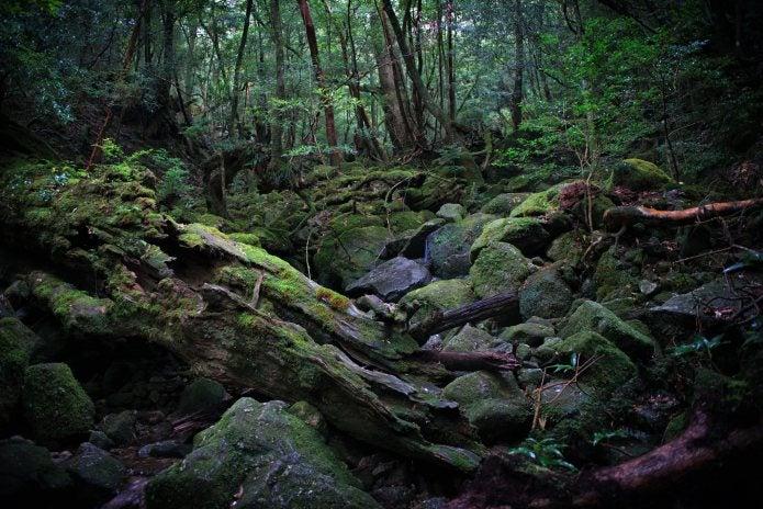 登山ツアー 屋久島