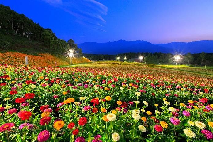 高原 富士見高原 花の里