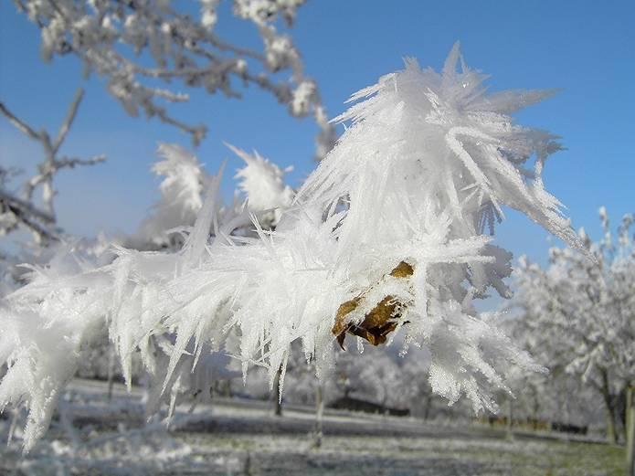 山の用語集 霧氷