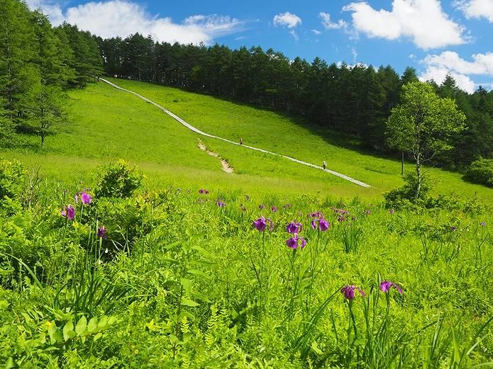 入笠山の湿原
