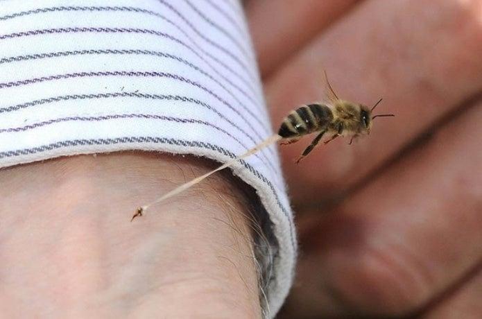 アナフィラキシーショックにさせるハチの針