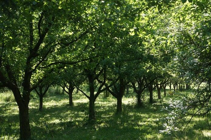 イラガがいる林