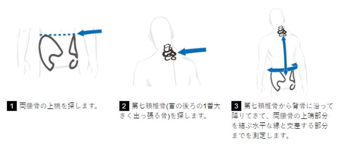 背面長の測り方の画像