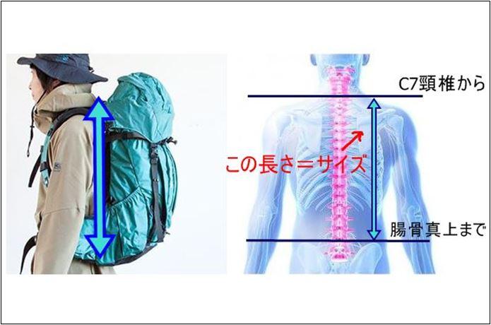 登山ザックの背面長の長さに合わせた選び方の図