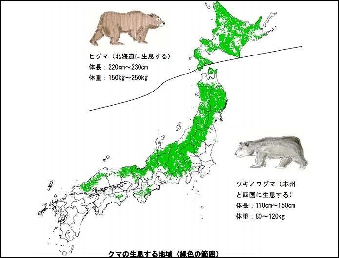 クマの分布