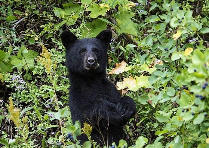 秋山の注意点 クマ